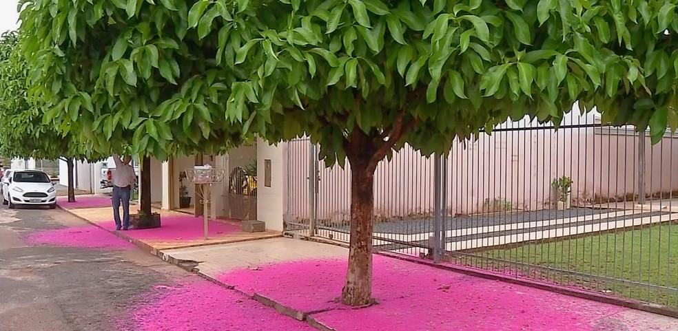 Morador diz que evita que carros estacionem perto das árvores (Foto: TVCA/ Reprodução)