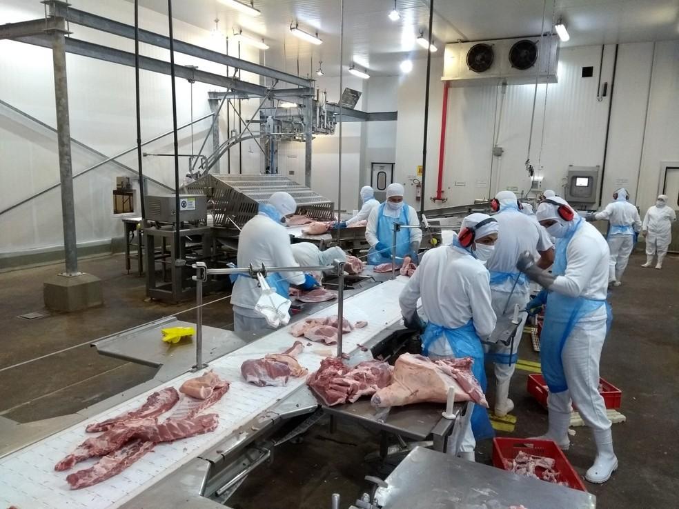 Dom Porquita vai se habilitar para exporta carne de porco para os países andinos e da Ásia  — Foto: Arquivo pessoal