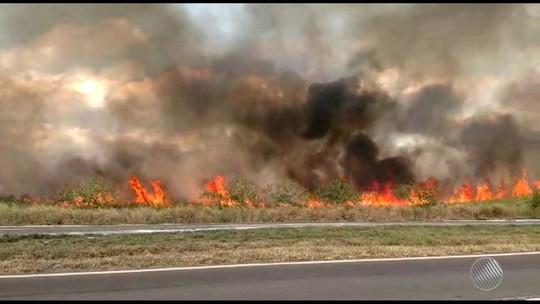 Incêndio atinge vegetação às margens da BR-324, na altura da cidade de Terra Nova