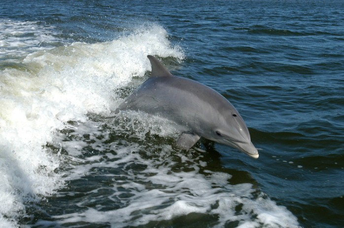 No Japão, a caça de golfinhos e pequenas baleias acontecem perto da cidade de Taiji (Foto: NASA/ Flickr)