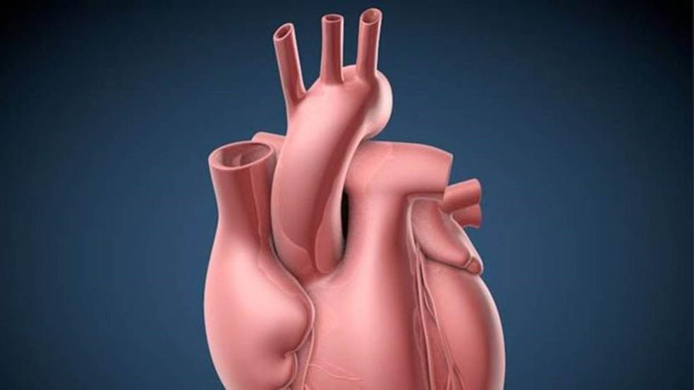 De acordo com os pesquisadores, é por isso que ataques cardíacos ocorrem praticamente só em humanos — Foto: C. Bickel/Cortesia/BBC