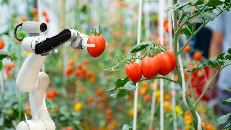 tomate-tecnologia-robô (Foto: Getty Images)