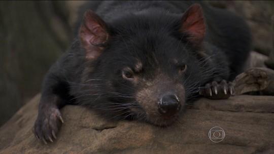 A Jornada da Vida leva você à ilha da Tasmânia, casa de bichos fascinantes