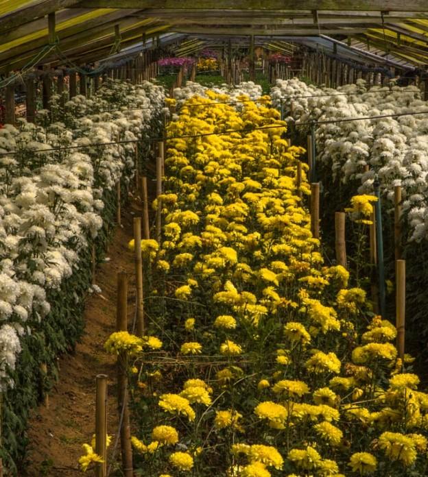 Anúncios de lockdown preocupam floricultores antes do dia internacional da mulher