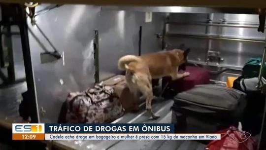 Mulher é presa no ES com 15kg de maconha em ônibus que saiu de Belo Horizonte