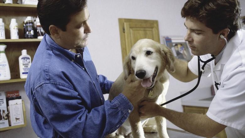 médico veterinário - cachorro - pet shop - animal de estimação  (Foto: Thinkstock)