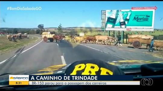PRF para rodovia para passagem de carros de boi e mais de 70 animais, em Goiás; vídeo