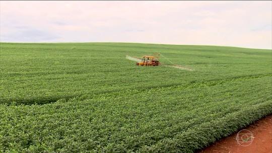 Agricultores e pecuaristas enxergam oportunidade no acordo entre UE e Mercosul