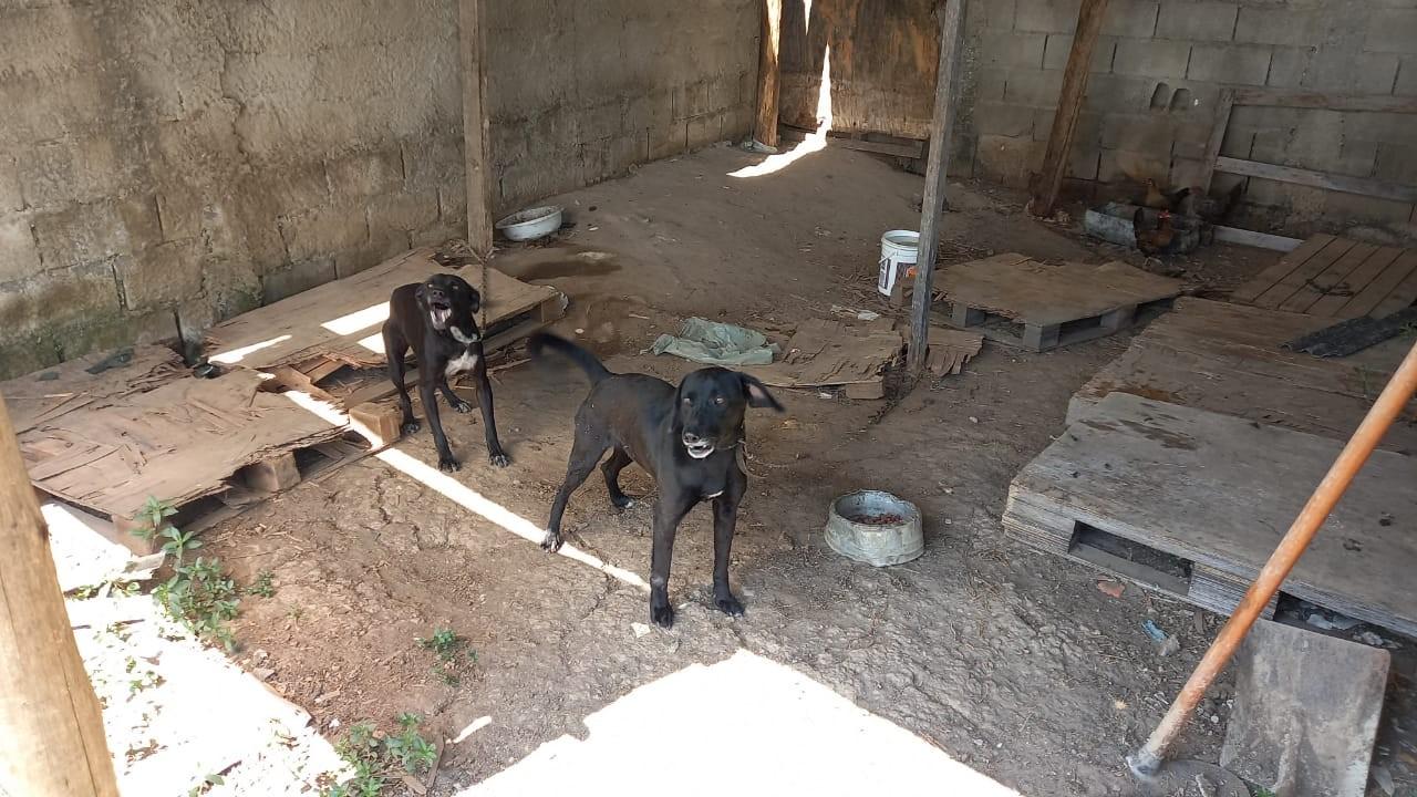 Homem é preso por maus-tratos a dois cães em Caçapava