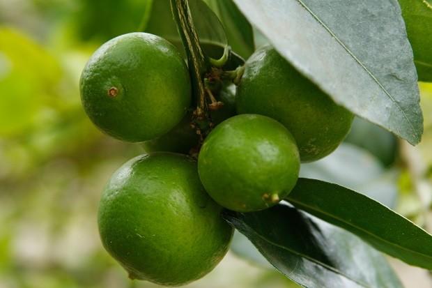 Como ter plantas frutíferas em vasos ou no quintal (Foto: Getty Images)
