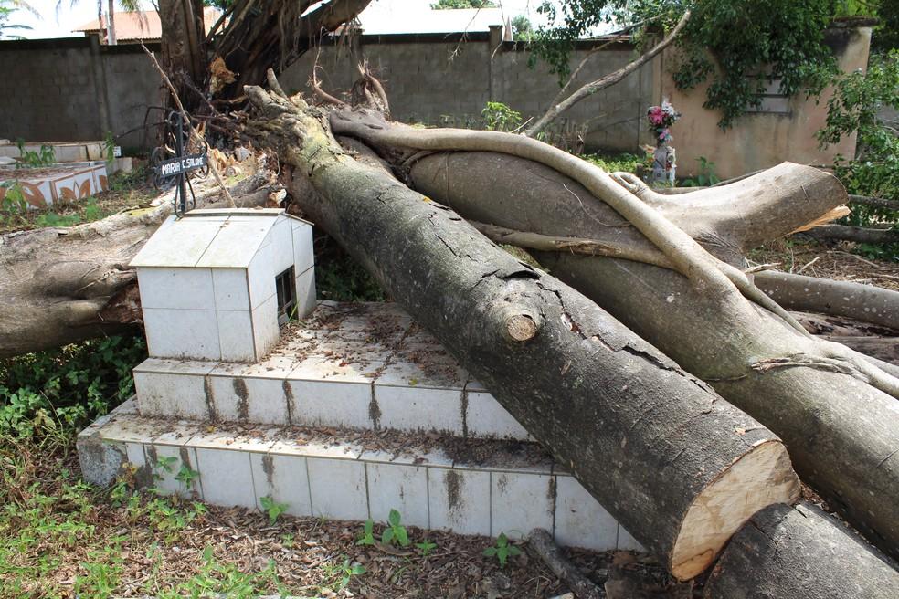 -  Árvore caiu há 15 dias e ainda não foi retirada do local.  Foto: Pâmela Fernandes/ G1