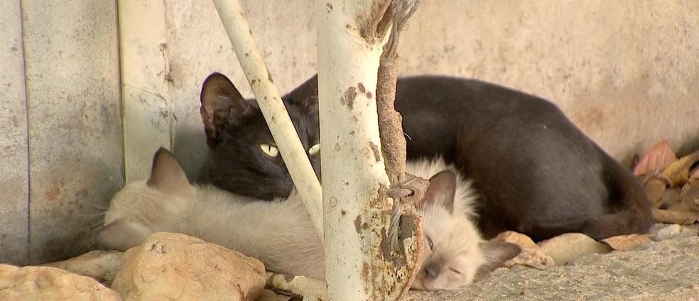 Inquérito foi aberto para investigar crime de maus tratos contra animais — Foto: TVCA/ Reprodução
