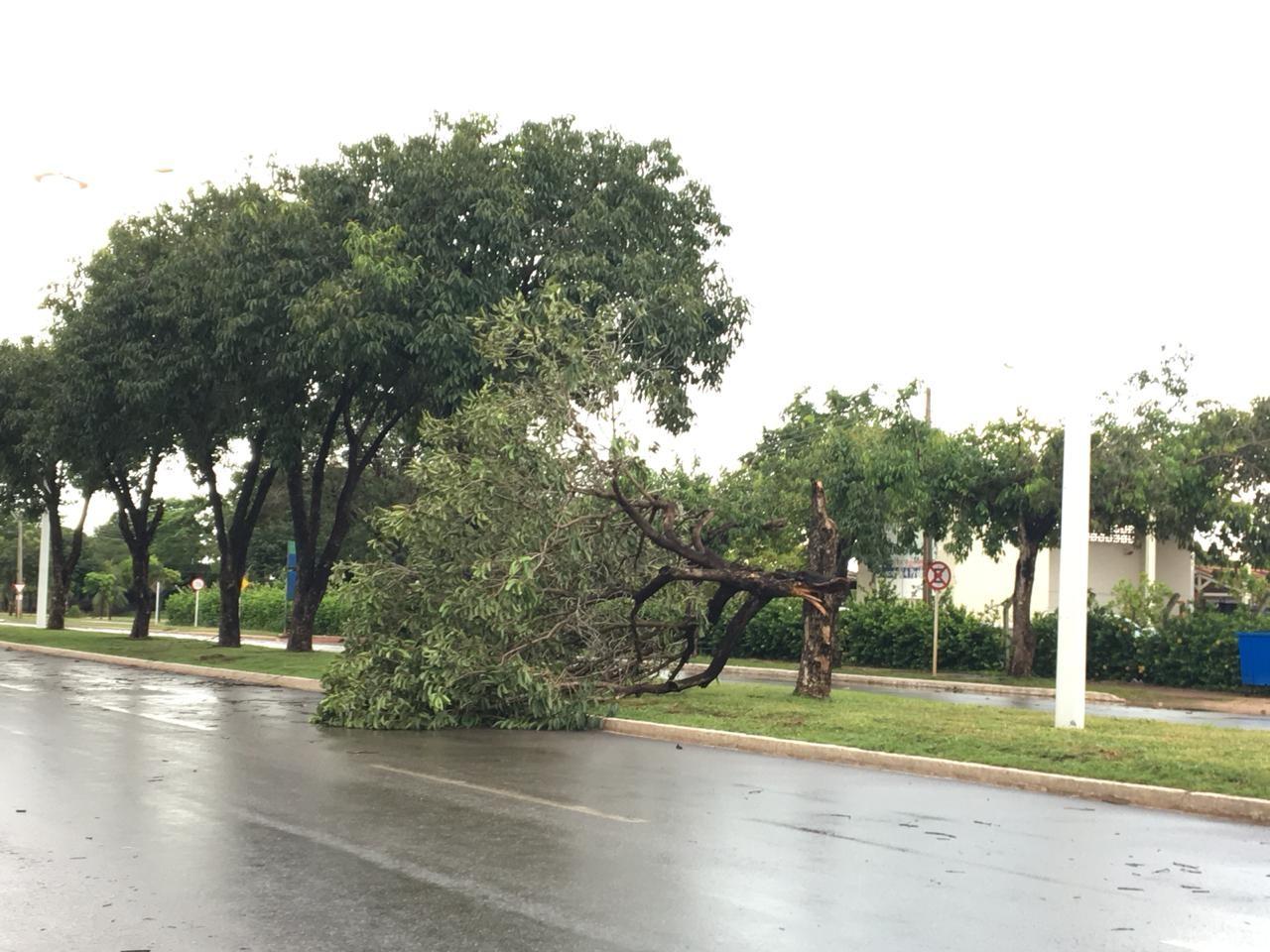 Tempestade derruba árvores em vários pontos de Palmas  - Noticias