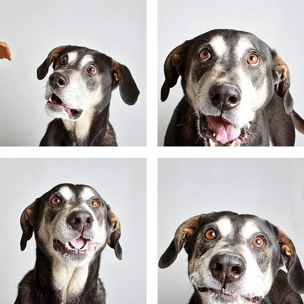 O fotógrafo Guinnevere Shuster fez as fotos para ajudar os animais a serem adotados (Foto: Reprodução)