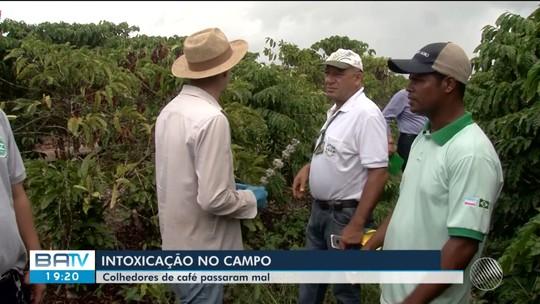 Trabalhadores rurais têm mal-estar após colheita de café em fazenda atingida por praga na Bahia