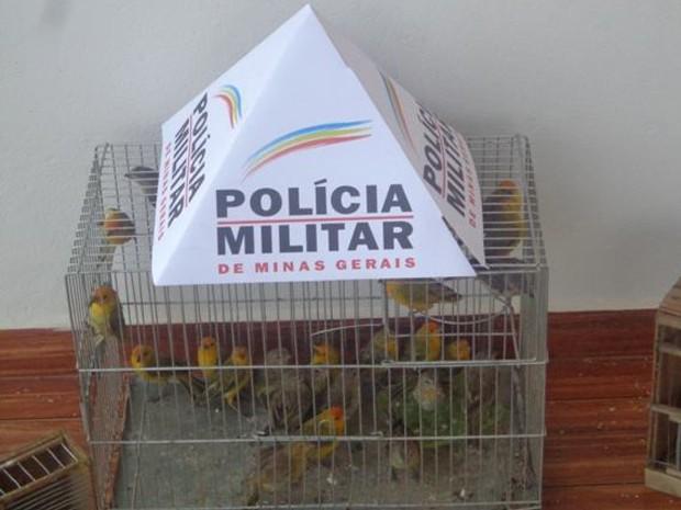 Pássaros que estavam sendo transportados de forma ilegal são apreendidos (Fot Polícia Militar de Meio Ambiente/Divulgação)