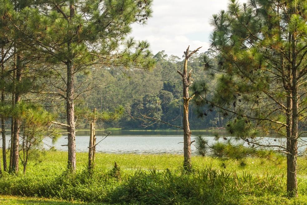 Paisagem do Parque Natural Municipal de Bororé, na Zona Sul de SP — Foto: Joca Duarte/Secretaria Municipal do Verde e do Meio Ambiente