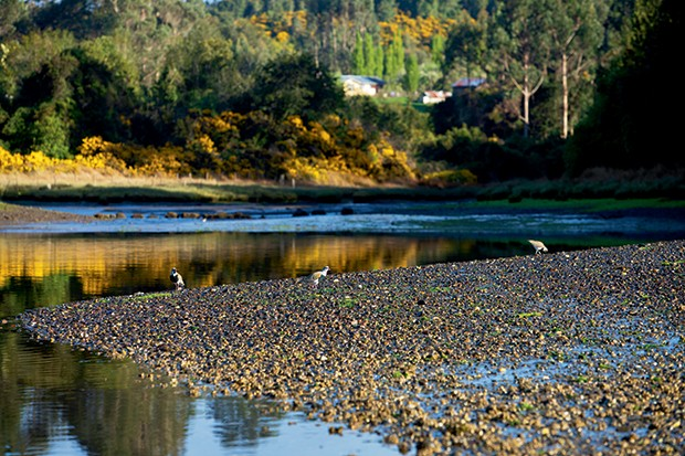 Lifestyle viagem Chile - Lago do hotel Tierra Chiloé (Foto: Carol Gherardi )