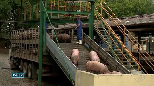 Empresas de abate de porcos dispensam funcionários e paralisam atividades no Sul do ES