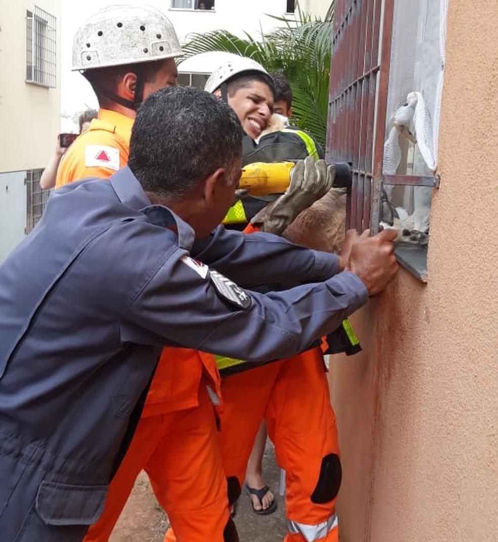 Bombeiros ajudam resgatar cadelinha que ficou presa em janela no bairro Floramar  — Foto: Terezinha Gonçalves/Arquivo pessoal