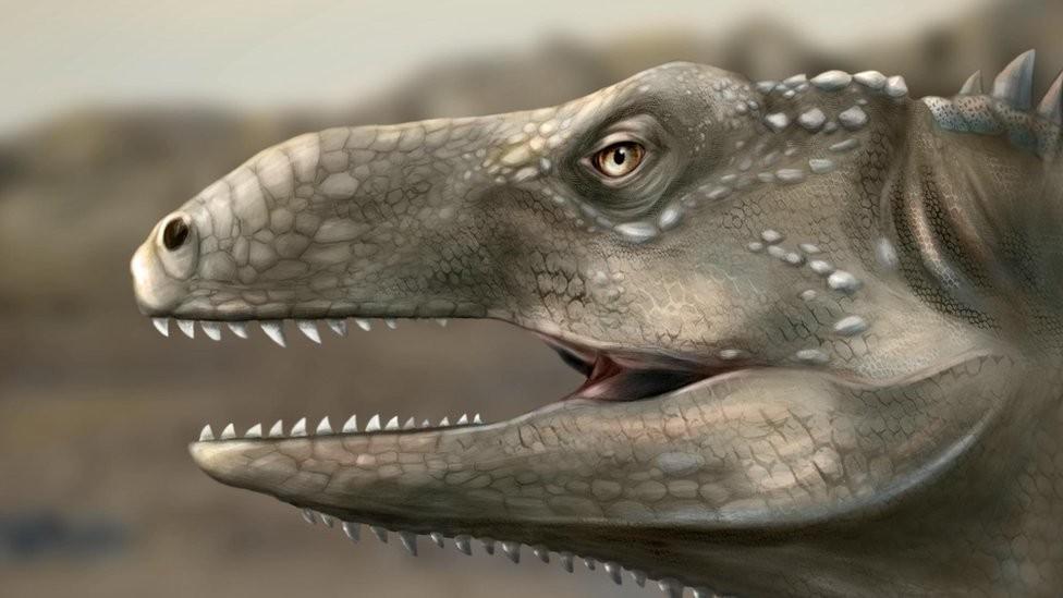 Descoberta nova espécie de réptil que viveu há 237 milhões de anos