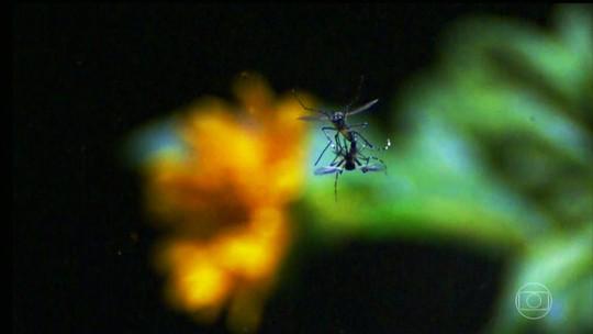 De Olho no Mosquito: Bem Estar explica como age o Aedes aegypti e as doenças que ele transmite