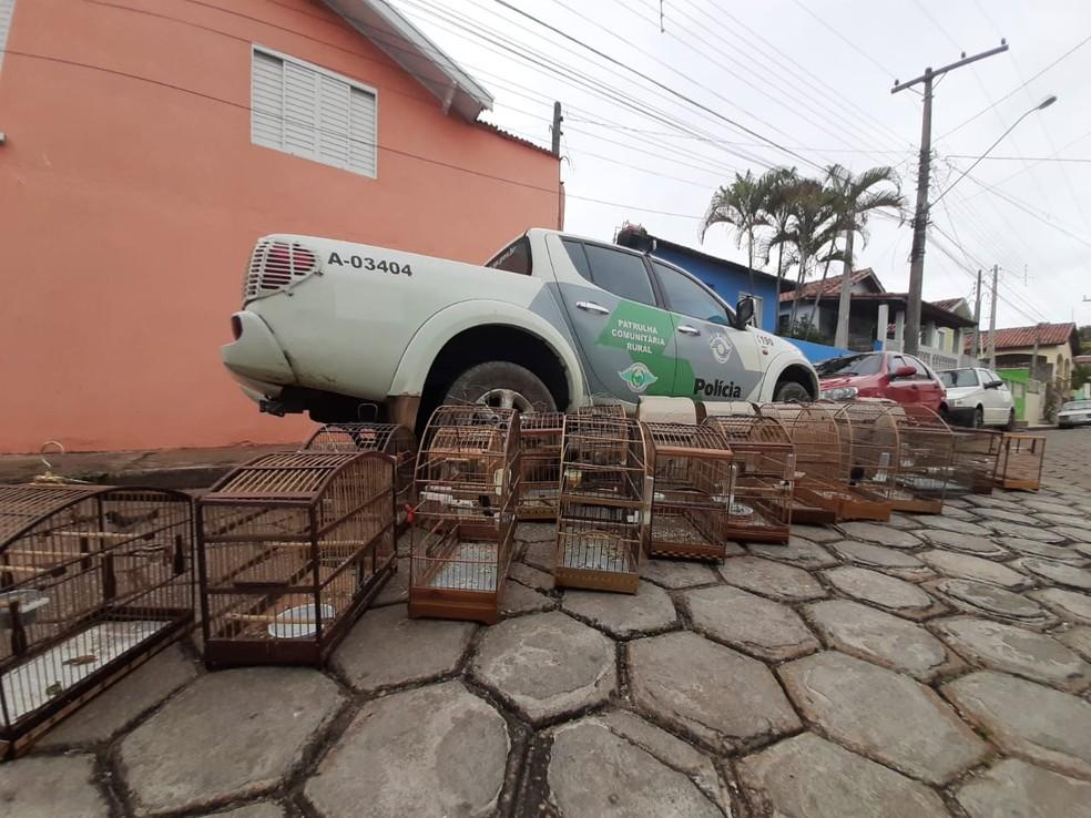 Aves foram encontradas em cativeiro na região central de Lorena — Foto: Divulgação/Polícia Ambiental