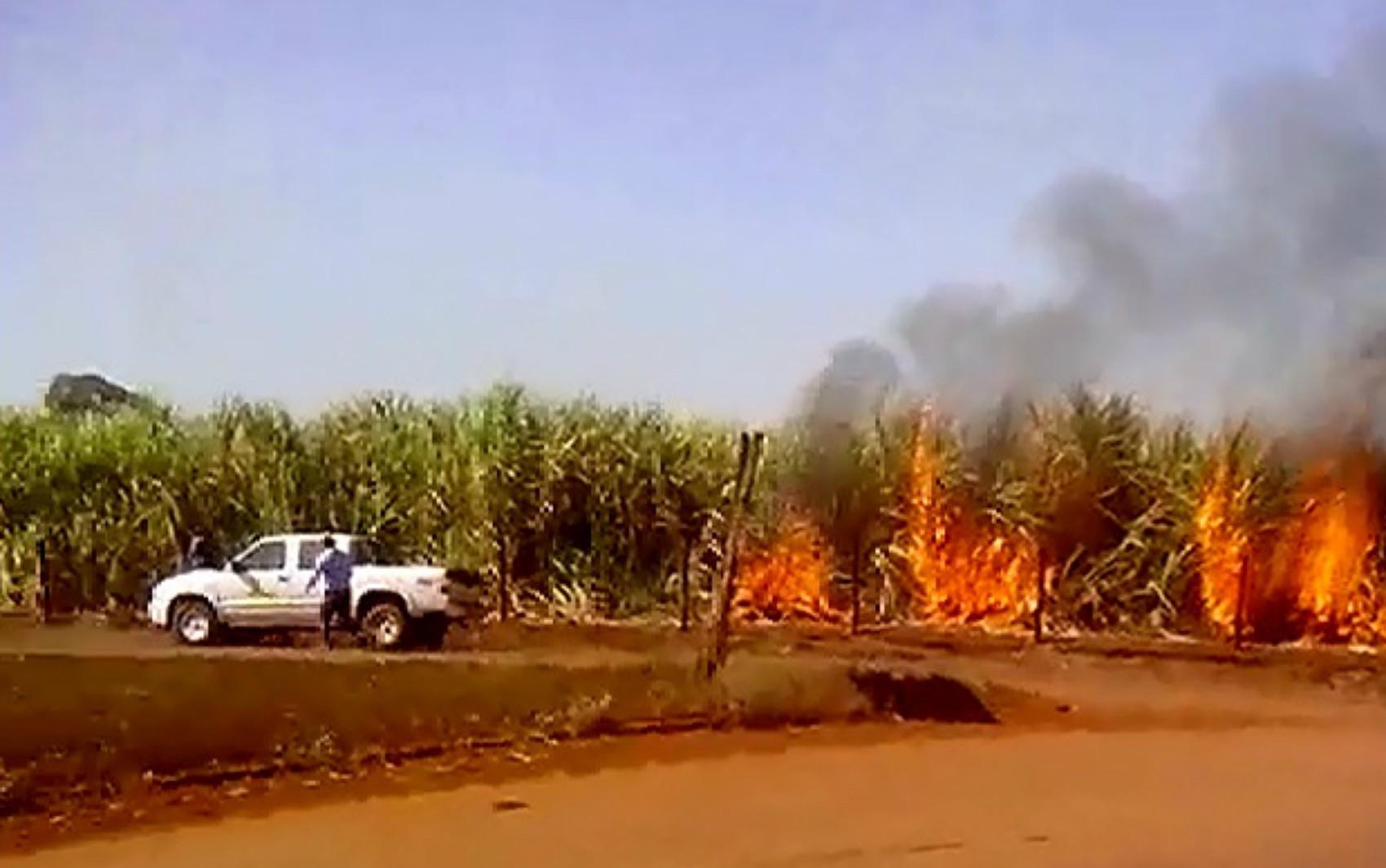 Tratorista registra equipe de usina ateando fogo a canavial em Morro Agudo; veja vídeo