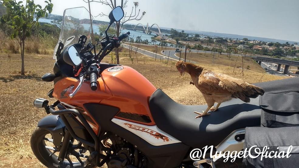 Nugget em passeio de moto no DF — Foto: Arquivo pessoal