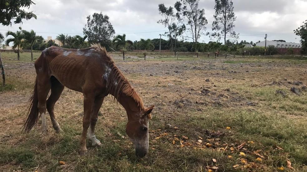 A égua já está medicada e sendo cuidada em um sítio, que fica no Eusébio. — Foto: Sarah Viana