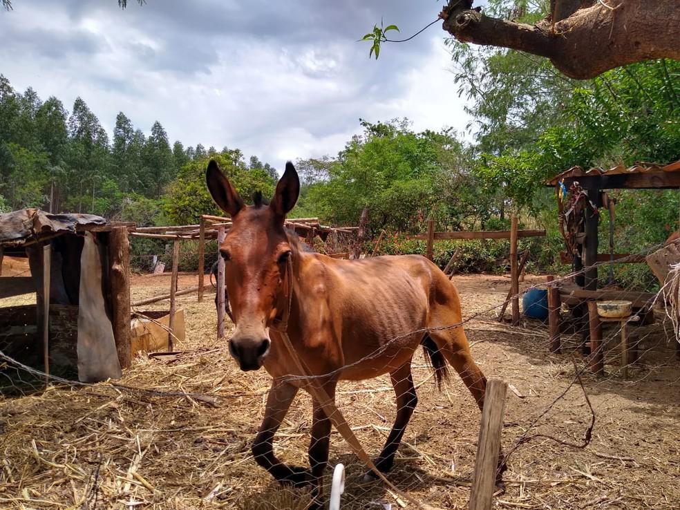 Outros animais foram encontrados no local em situação degradante em São Manuel  — Foto: Guarda Civil Municipal / Divulgação