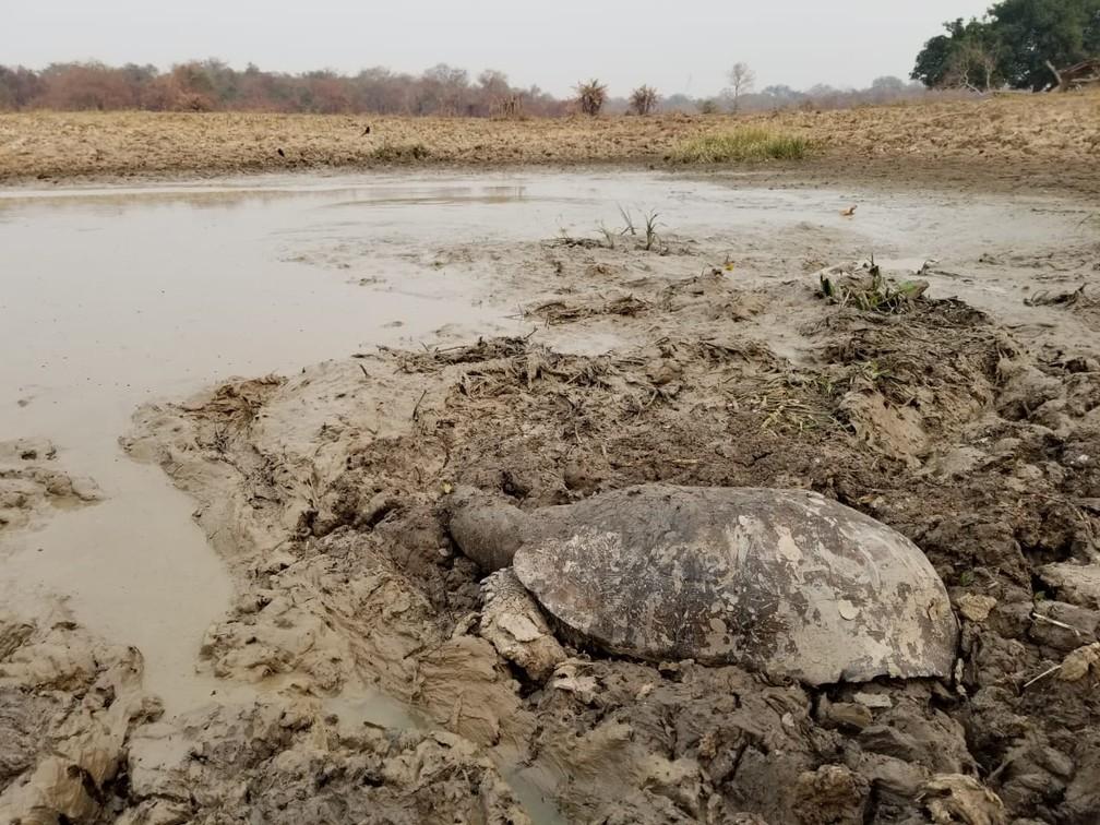 Pantanal vive intenso período de estiagem — Foto: Christine Strussmann/Arquivo Pessoal