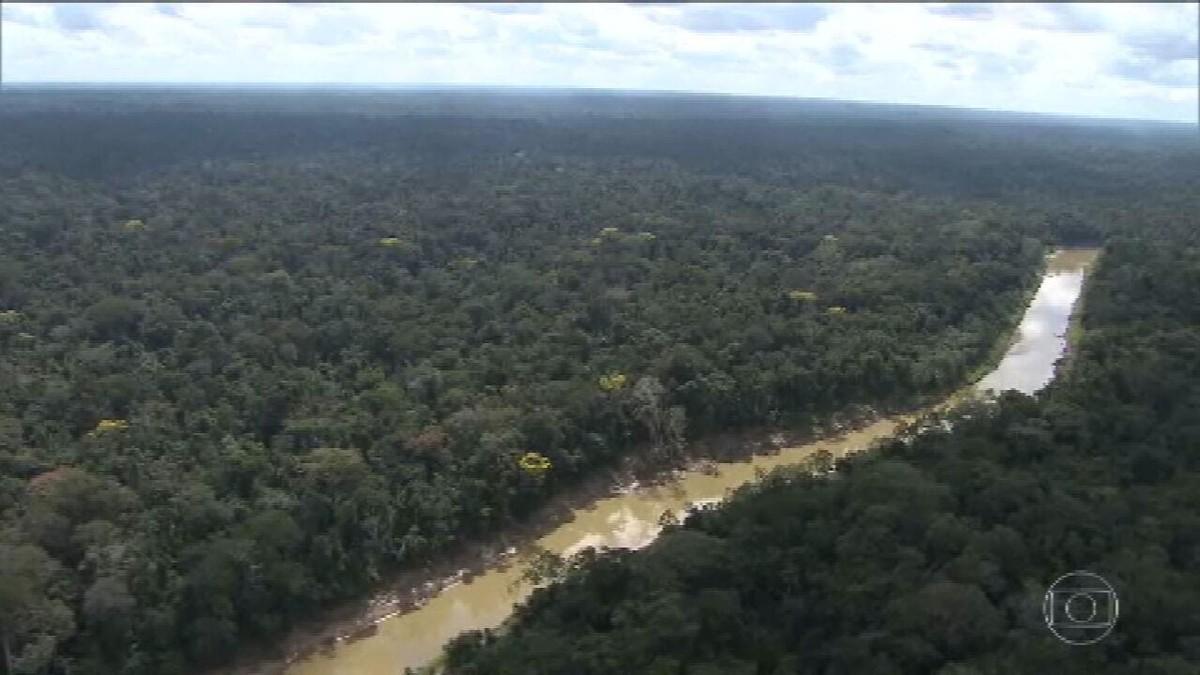 Governo recriará comitê orientador do Fundo Amazônia, e vice Mourão diz que vai presidir thumbnail
