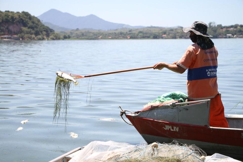 Quase três toneladas de peixes mortos são retiradas de lagoas em Maricá, no RJ — Foto: Divulgação/Prefeitura de Maricá