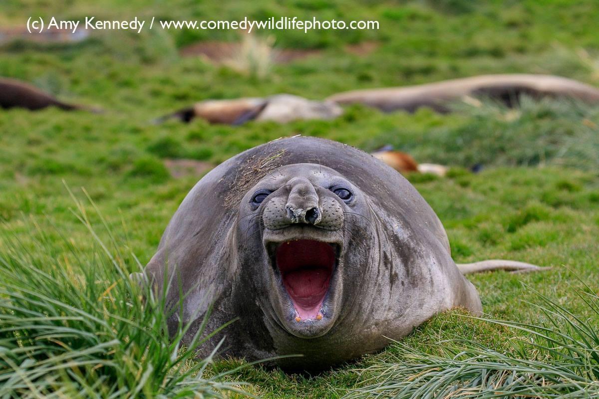 """""""KOÉ RAPAZIADA!"""" (Foto: Amy Kennedy / Comedy Wildlife Photography Awards )"""