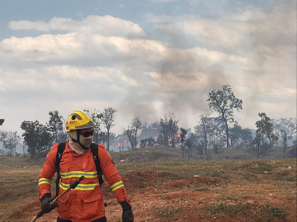 Bombeiro combate incêndio florestal no Parque Burle Marx, em Brasília — Foto: Larissa Passos/ G1