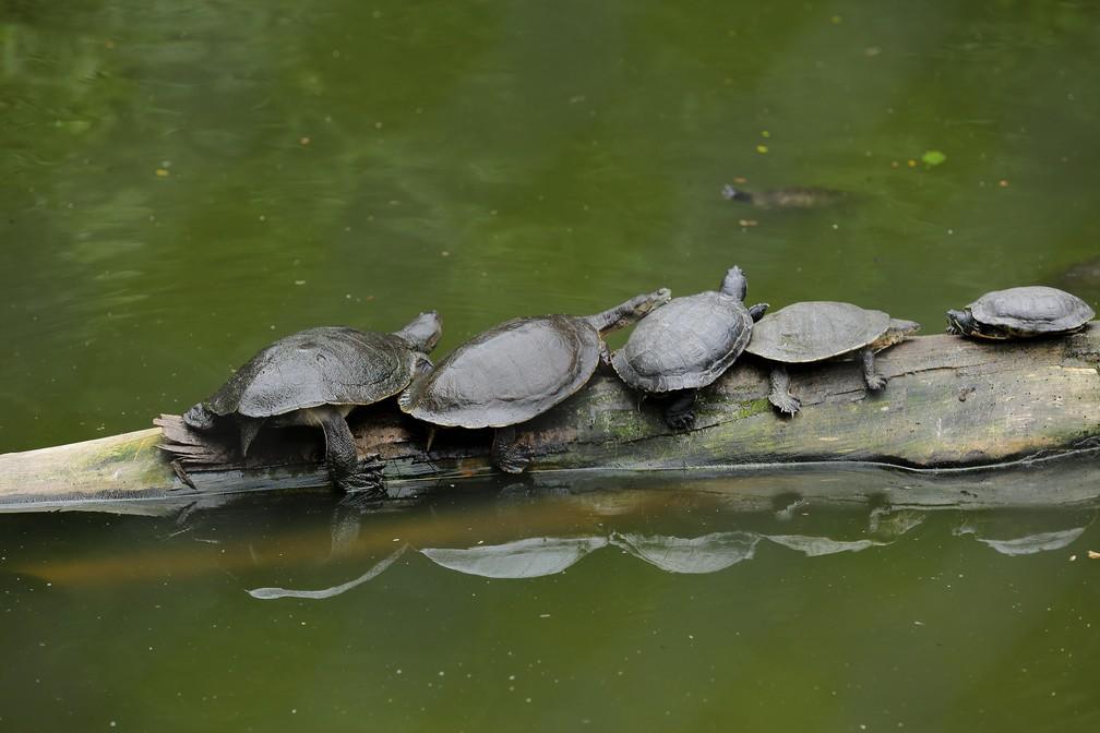 Zoológico de Curitiba fica localizado no bairro Alto Boqueirão, em Curitiba  — Foto: Giuliano Gomes/PR Press