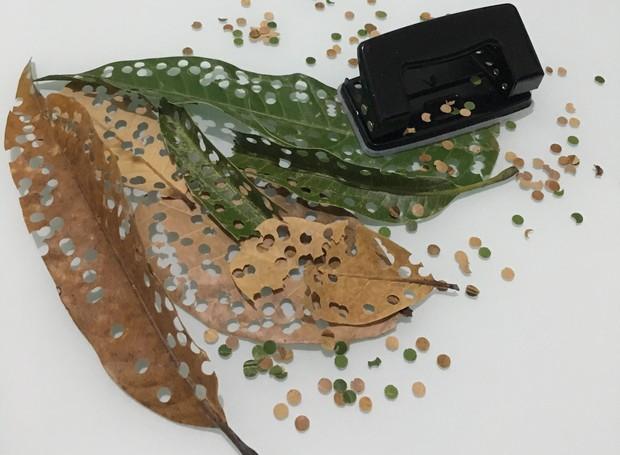 Folhas recém-caídas viram matéria prima para o confete sustentável (Foto: Victor Hugo Sampaio/Divulgação)