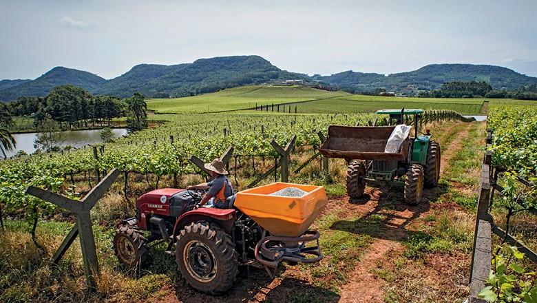 Tratores nos vinhedos e a cantina da vinícola (Foto: Marcelo Curia)