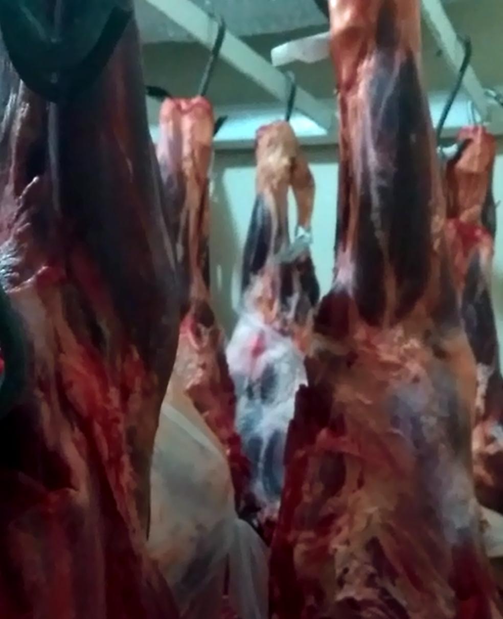 Cerca de oito toneladas de carne roubada foram apreendidas pela polícia em Rio Preto (SP) (Foto: Polícia Civil/Divulgação)