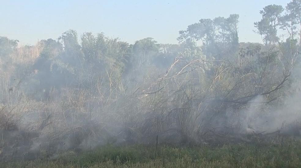 Fogo atingiu área florestal de Araçatuba (Foto: Reprodução/TV TEM)