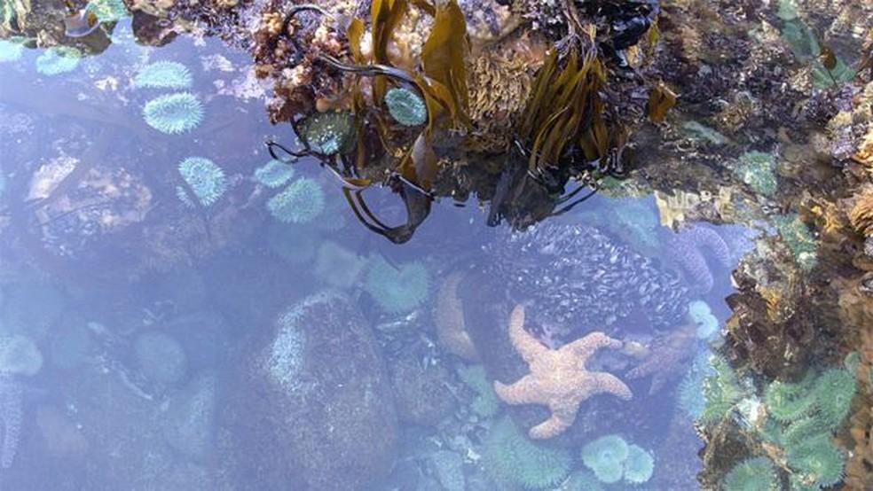As poças de maré estavam cheias de vida... e de estrelas do mar — Foto: Passion Pictures/BBC