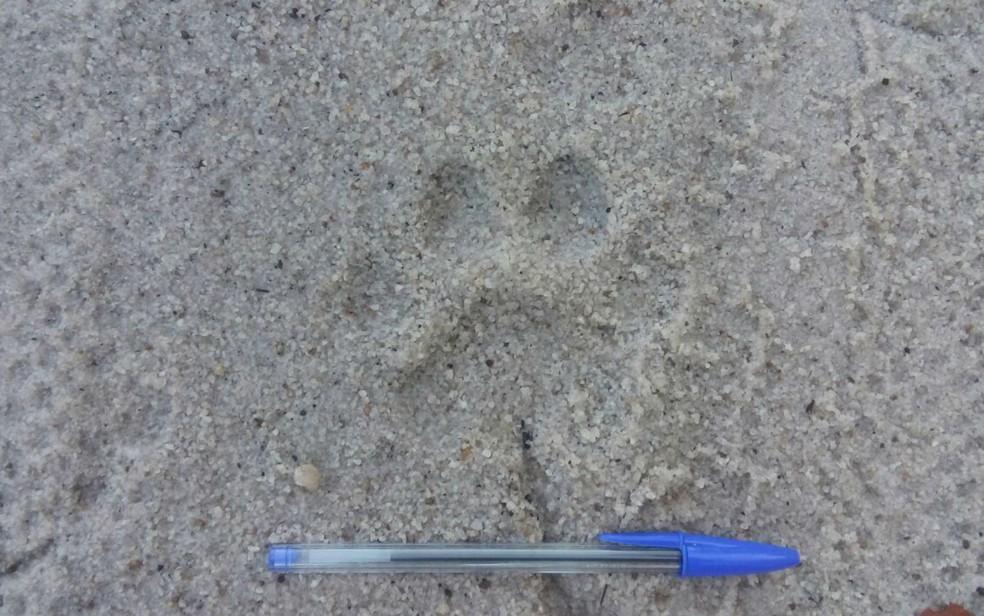 Marca de pegada deixada pelo animal (Foto: Divulgação/Assessoria  RPPN Estação Veracel )