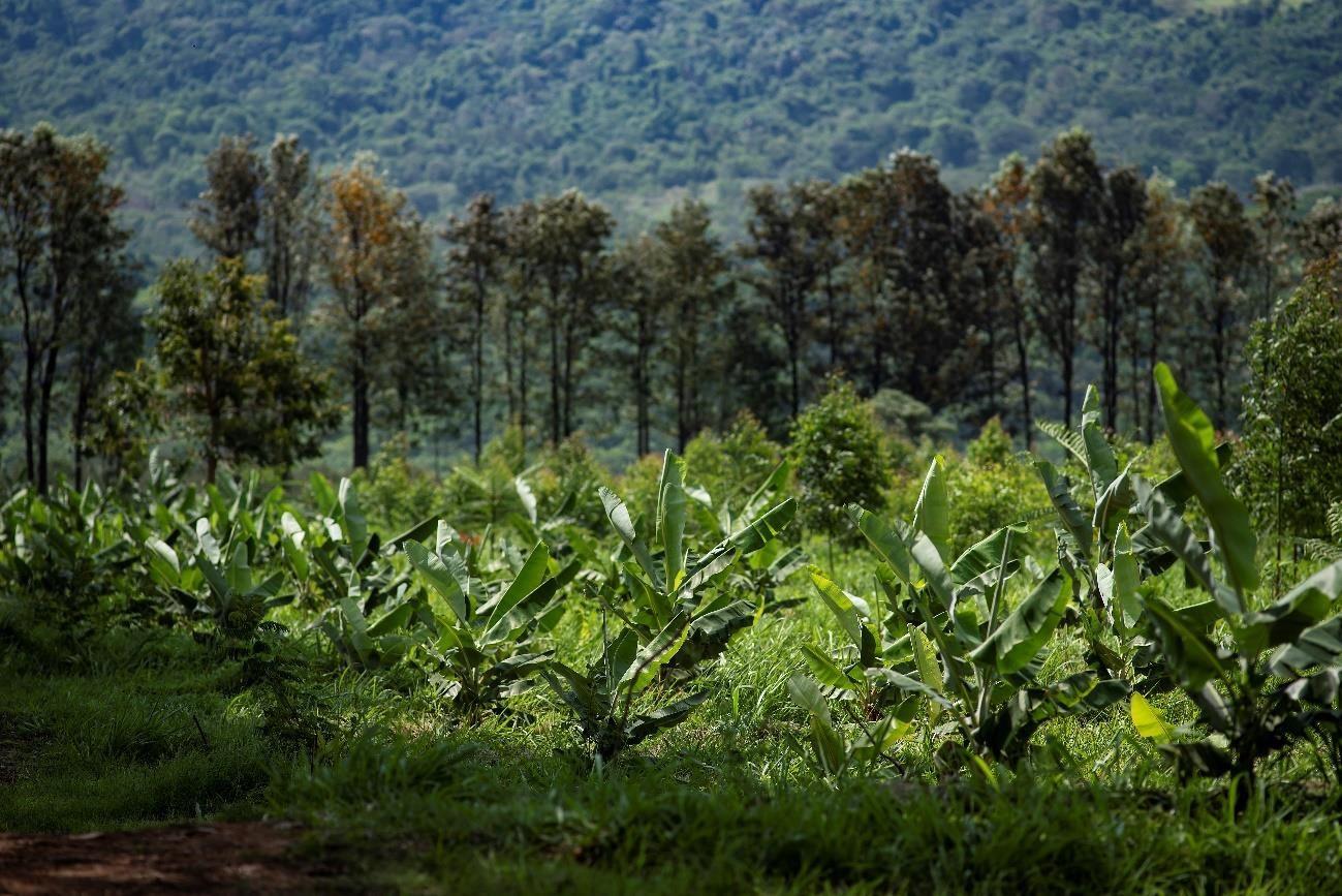 agricultura-regenerativa-fazenda-rizoma-pedro-paulo-diniz (Foto: Fazenda Rizoma/Divulgação)