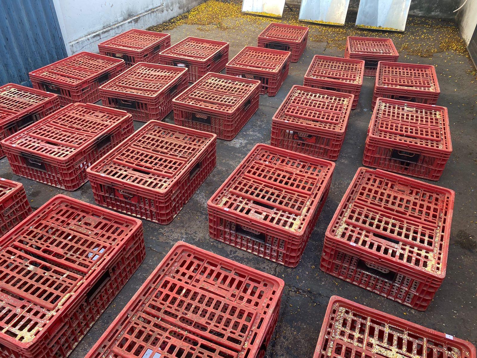 Mais de 20 galos são apreendidos em casa no Bairro Progresso em Ituiutaba; suspeita é de que eles eram usados em rinhas