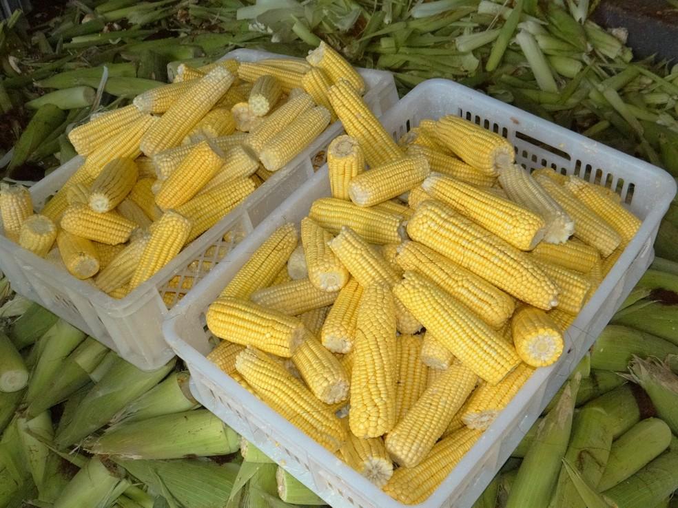 10 Festa do Milho ser realizada em Santo Expedito  Foto PascomSanturio de Santo Expedito
