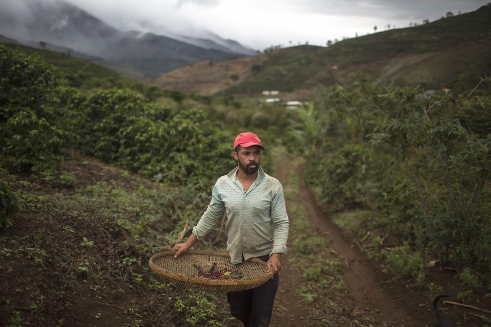 Produtor João Paulo Rodrigo colhe grãos de café em sua fazenda familiar em Forquilha do Rio (Foto: Mauro Pimentel/AFP)