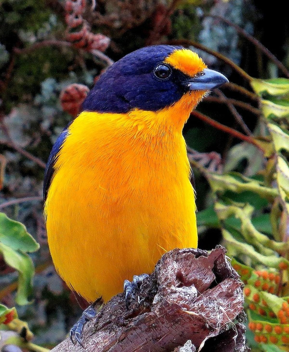 Exposição fotográfica apresenta aves registradas na cidade de São Carlos (SP)