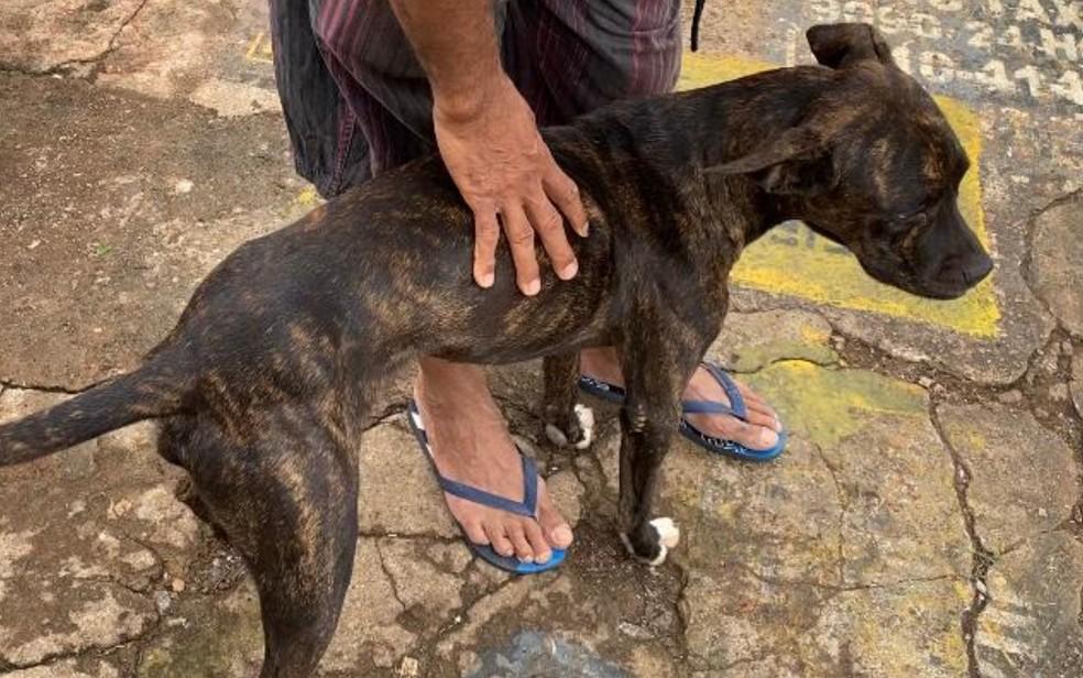 Cachorro que fica na porta de Cais ganha carinho de comerciantes, em Goiânia, Goiás — Foto: Lis Lopes/G1