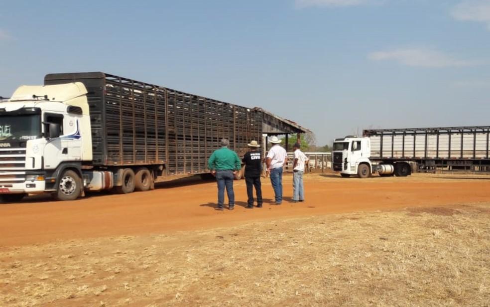 Animais foram transportados em caminhões de volta para o estado de Goiás — Foto: Polícia Civil/Divulgação